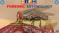 Forensic Entomology.pdf